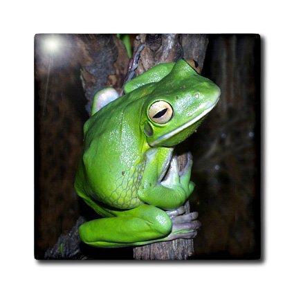 Fun Tree Frog Ceramic Tiles